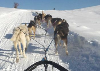 Happy dogs pull a sled along a winter trail west of Steamboat Springs