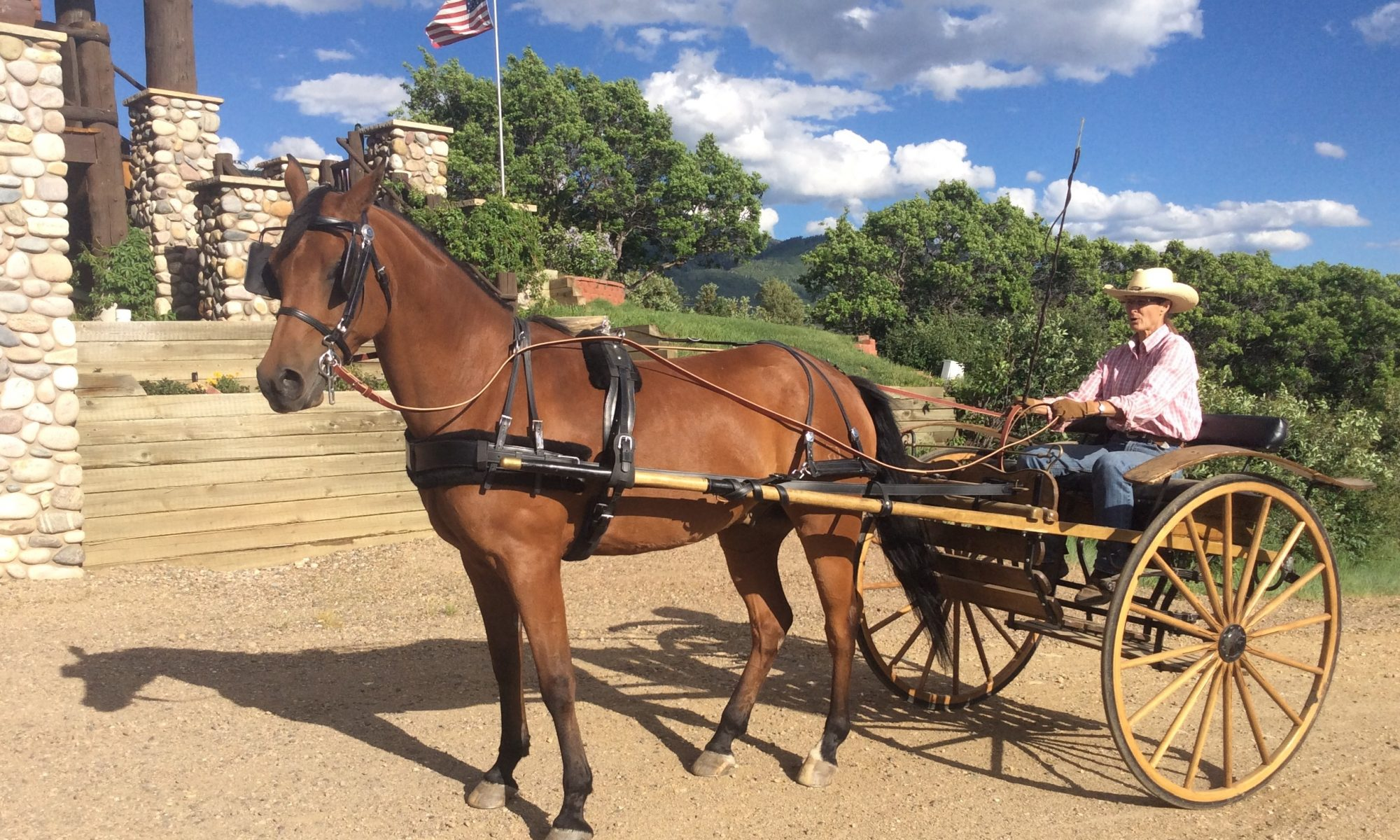Horse and Carriage at Spring Creek Farm