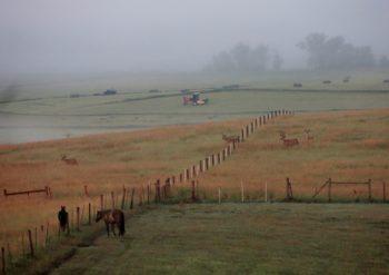 Deer in fall pasture