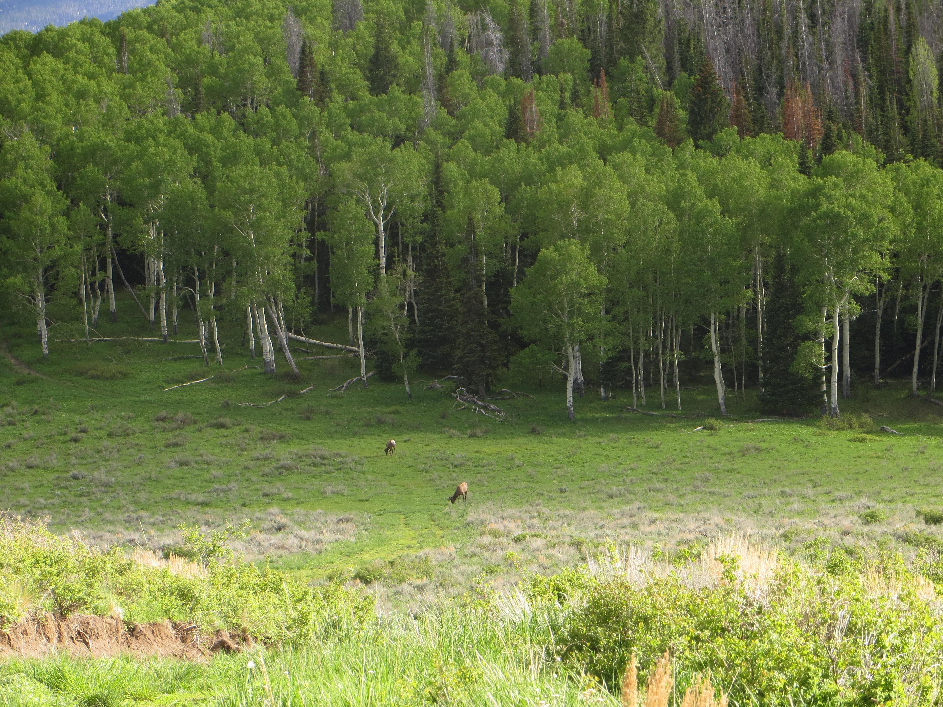 Little Trout Ranch