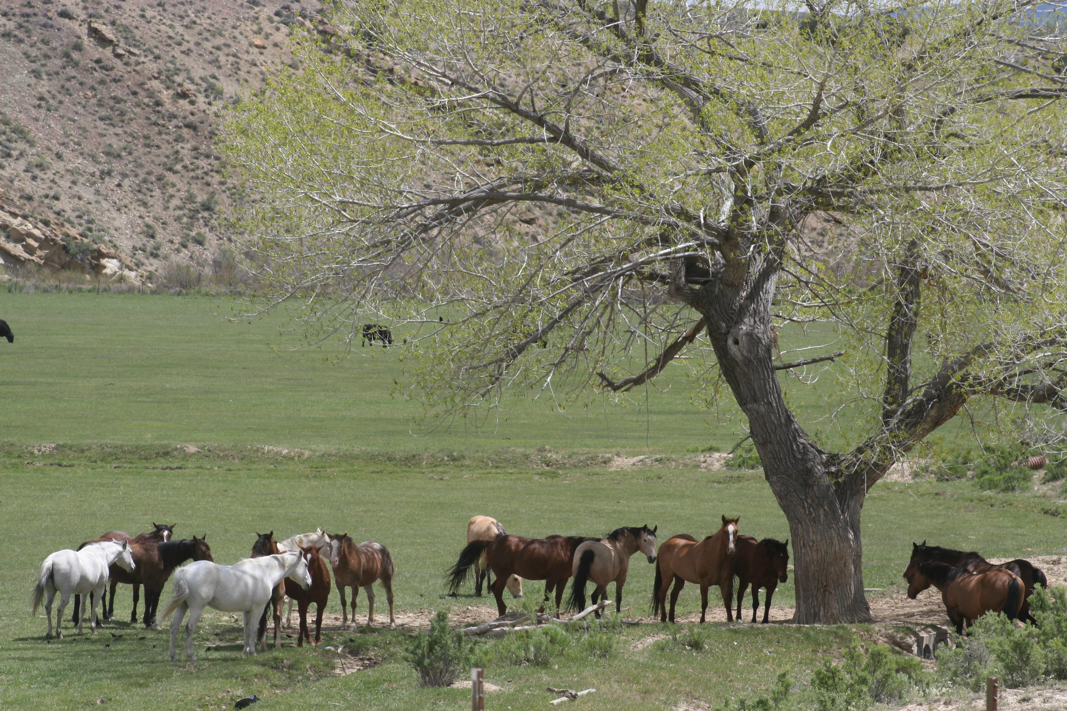 Wyatt Ranch – Buyer Represented