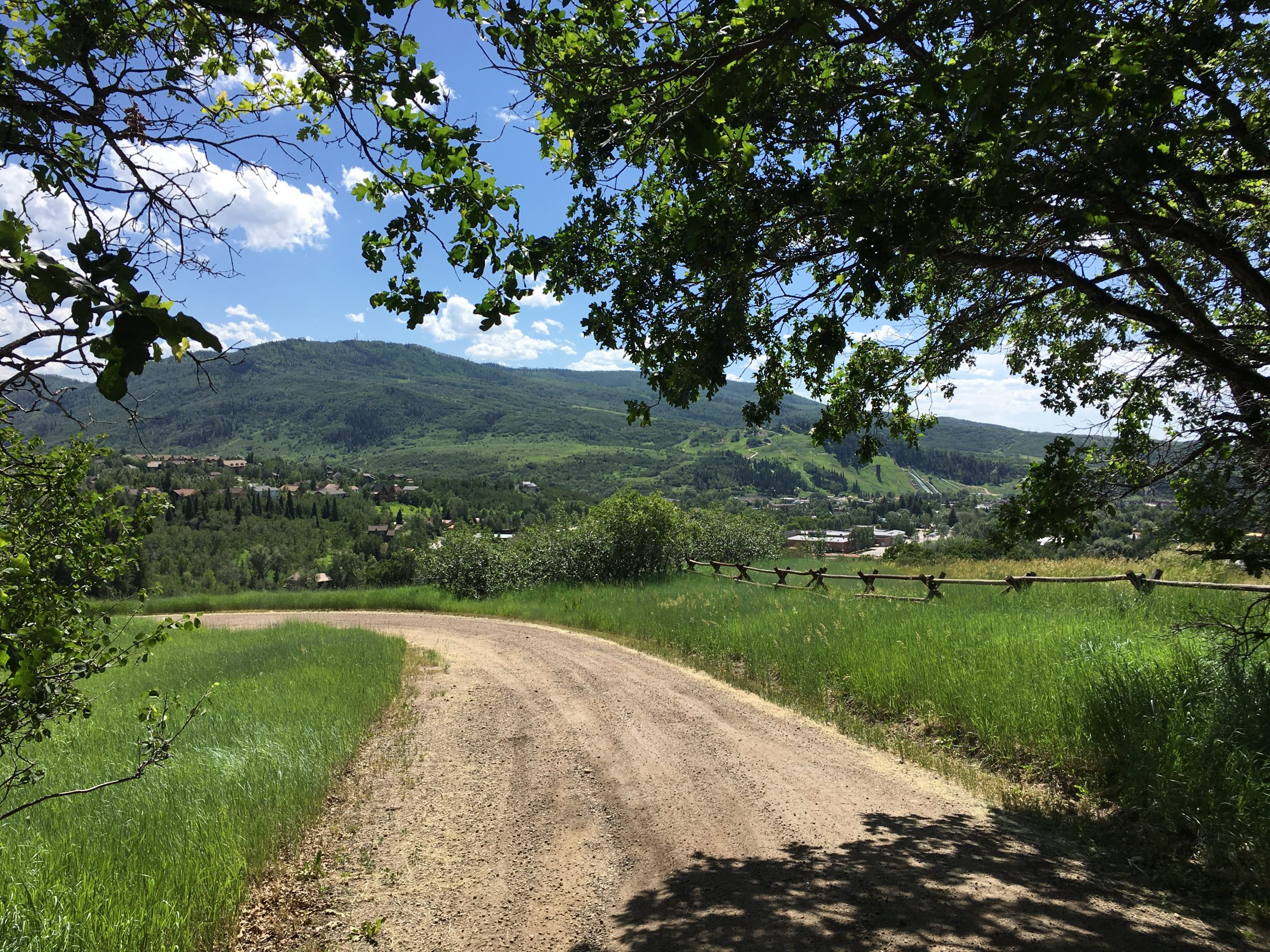 A tree lined lane with mountain views sold in 2020 - A memorable year for real estate!